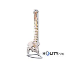 colonna-vertebrale-anatomica-h1334