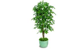 Ficus exotica almora artificiale h9301